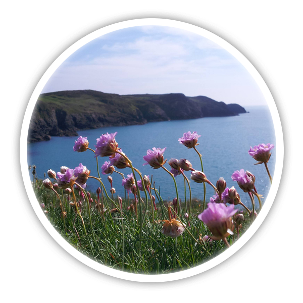 Pembrokeshire scallops blog - keep up to date with the latest news