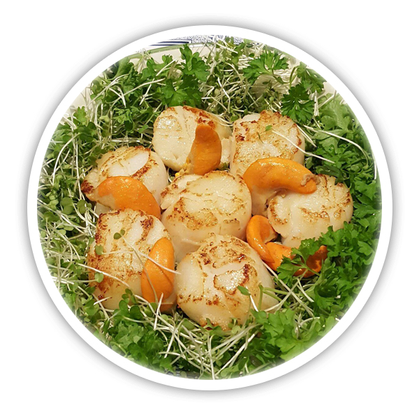 Pembrokeshire Scallops cooked and ready to eat - recipes and how to guides