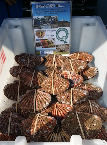 Pembrokeshire king scallops are available at various farmers markets across south west wales